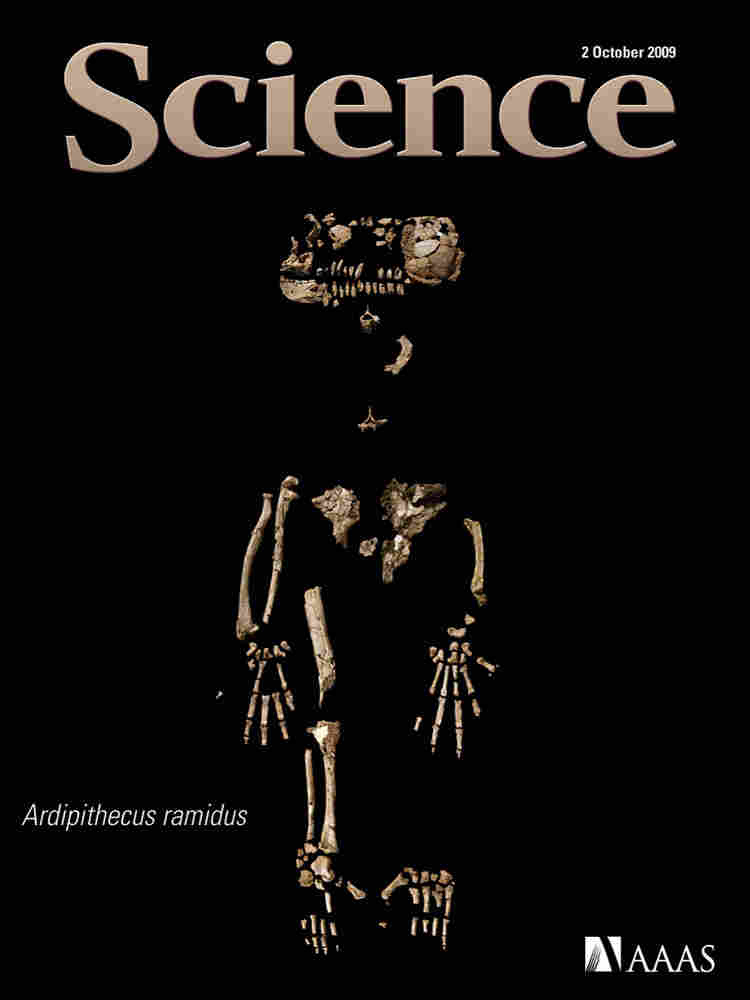 The cover of Science depicting the partial skeleton of Ardipithecus ramidus.