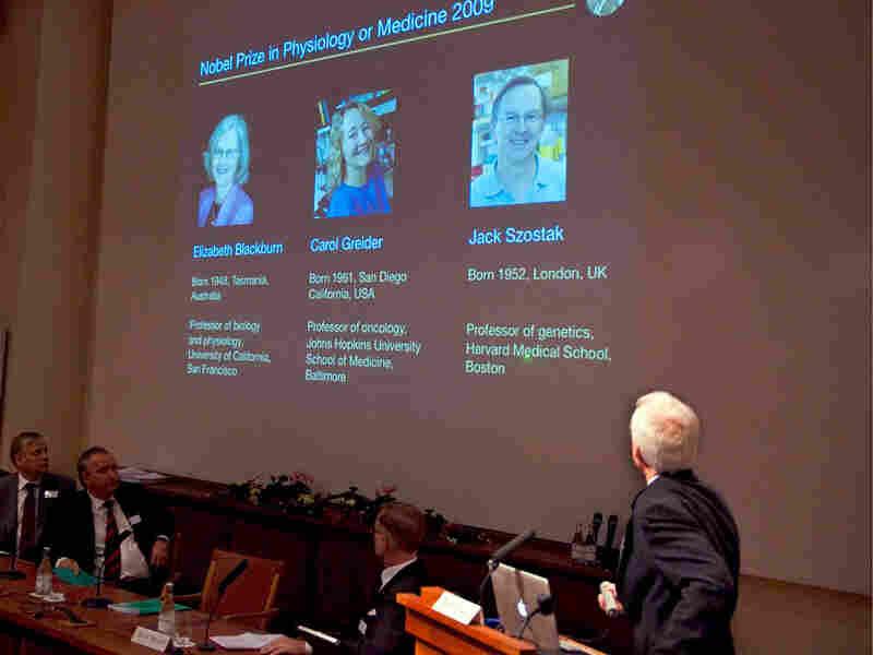 Professor Rune Toftgard presents portraits of the Nobel Prize winners for Medicine 2009.