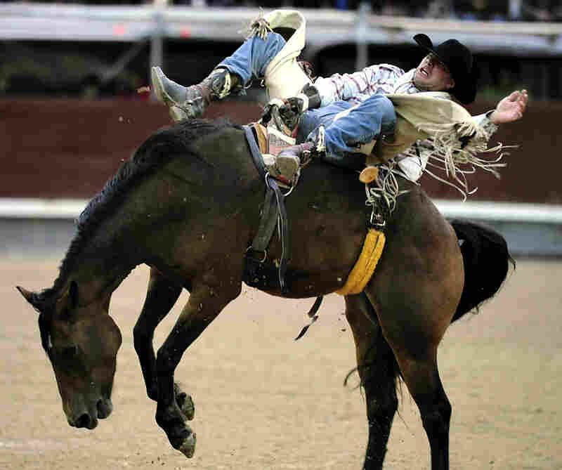An American cowboy rides bareback during a rodeo at Las Ventas bullring in Madrid