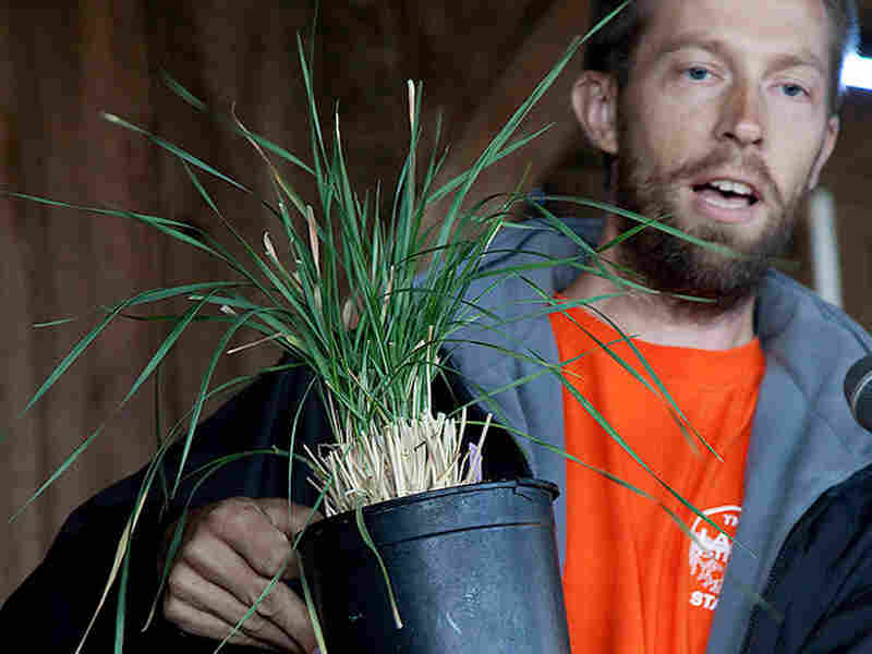 Lee DeHaan holding wheat plant