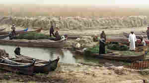 Iraqi fishermen and farmers prepare to sail in the marshes, north of the southern city of Basra