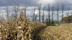 A farmer harvests corn on a farm near in Spring Mills, Pa.