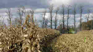 A farmer harvests corn on a farm near in Spring Mills, Pa.