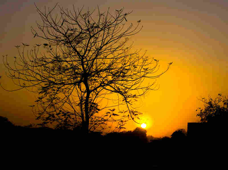 A tree against the dusk in India