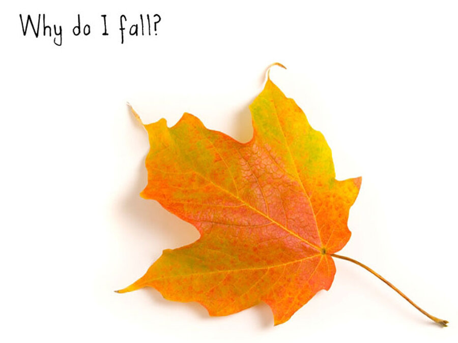 why leaves really fall off trees