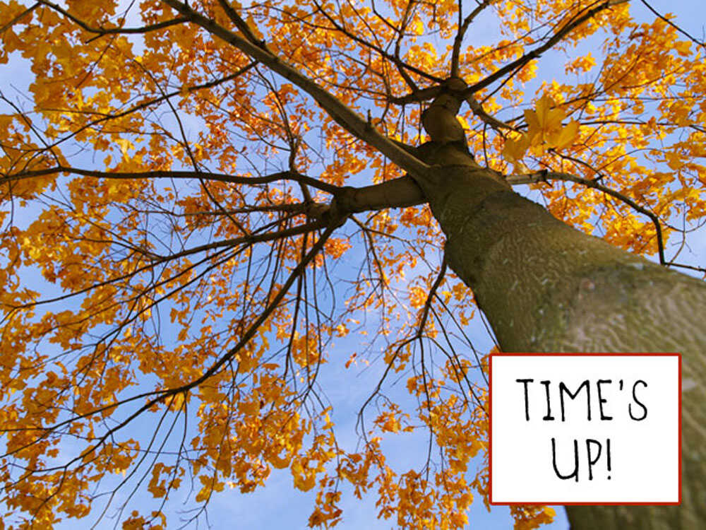 An illustration of a tree telling a leaf its time is up.