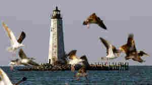 EPA Drafts Chesapeake Bay Cleanup Strategy