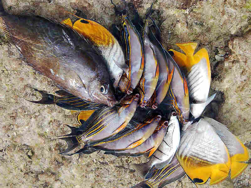 A day's catch on the Pacific island of Kiribati.