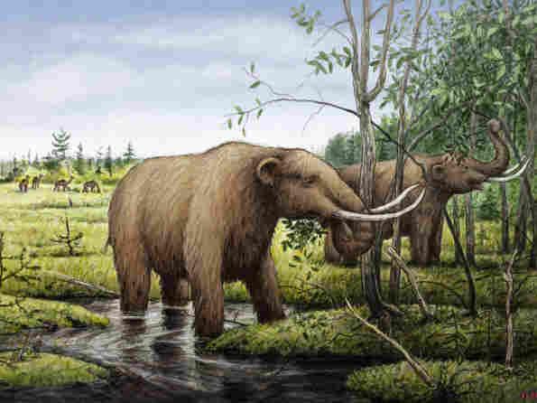 Mastodons eating black ash trees