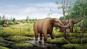 Mastodons eating black ash trees