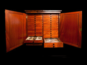 Victorian-era rosewood cabinet containing butterfly and beetle specimens