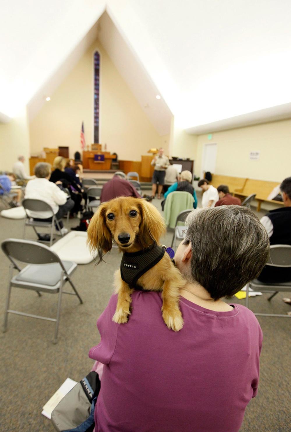 http://media.npr.org/assets/news/2009/11/29/dogs01_custom.jpg?t=1259169245&s=51