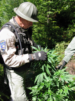 Retired Humboldt Sheriff Steve Cobine hiked into rugged terrain to destroy illegal marijuana grows.