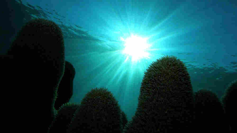 The reefs of Cuba's Los Jardines de la Reina are protected