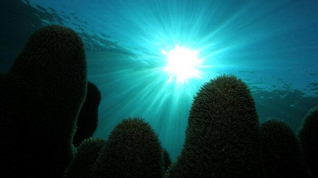 The reefs of Cuba's Los Jardines de la Reina are protected