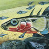 An artist's drawing of a marine sticklefish