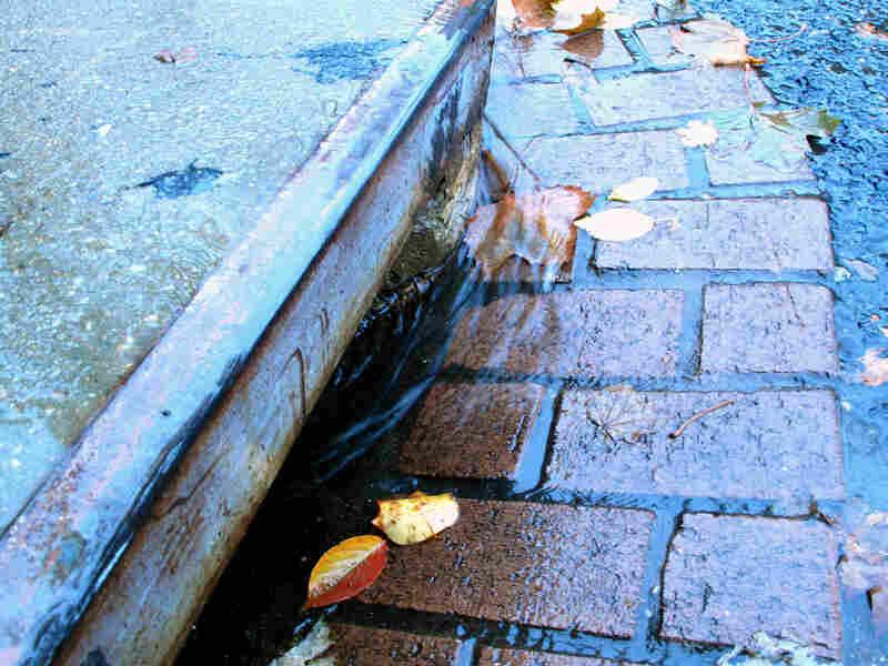 Rain flows into a Washington, D.C. gutter.