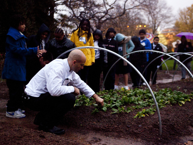 Sam Kass, the assistant White House chef, picks spinach from the garden.