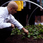 Sam Kass picks spinach from the garden.