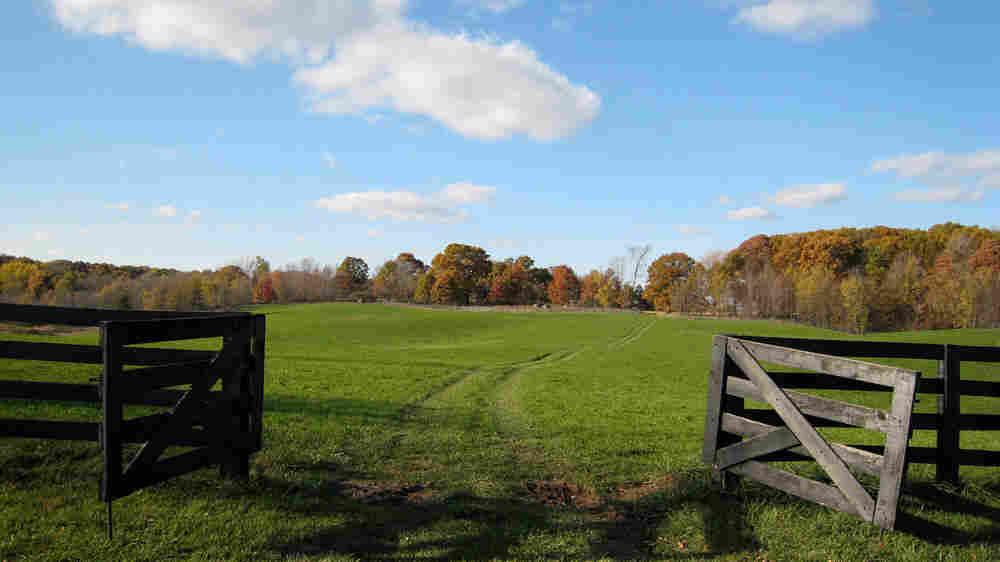 Wide view of Joan Graham's farmland