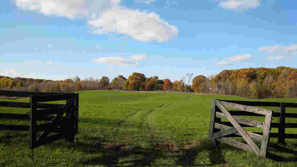 Wide view of Joan Graham's farmland