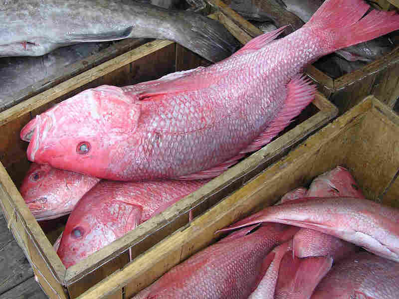 Red snapper stacked in crates
