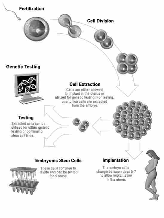 A schematic showing how human embryonic stem cells are extracted.