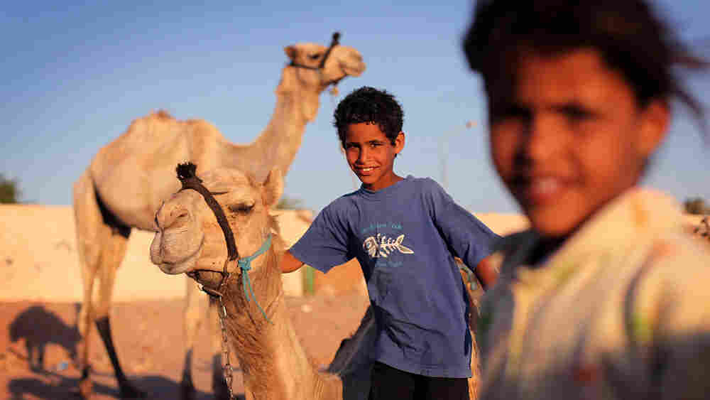 Bedouin children play with their camels after a day of giving rides to tourists in June in Dahab, Eg