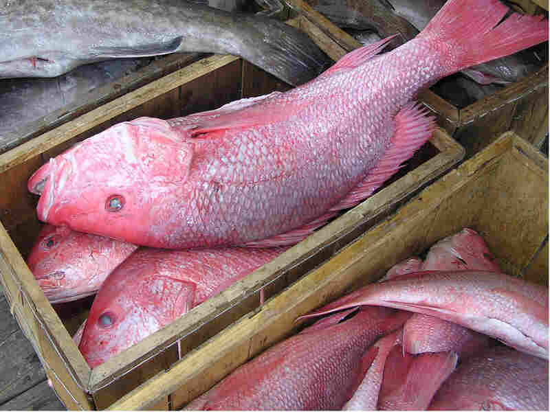 Red snapper in a box.