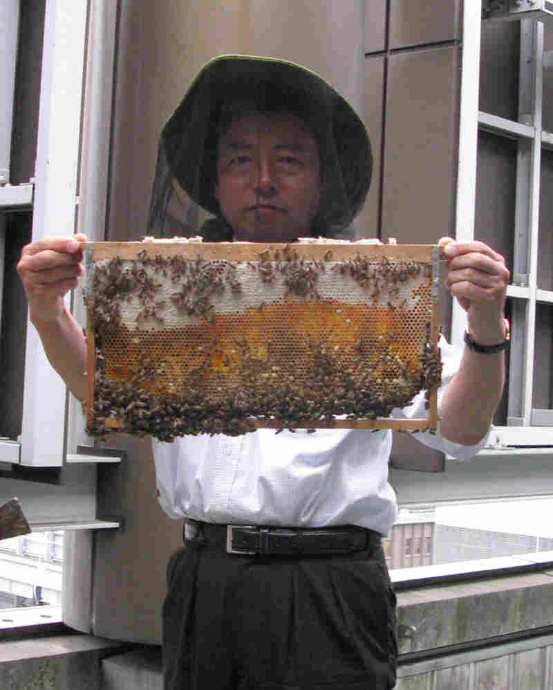 Atsuo Tanaka of the Ginza Honeybee Project says his 300,000 honeybees chase away crows.
