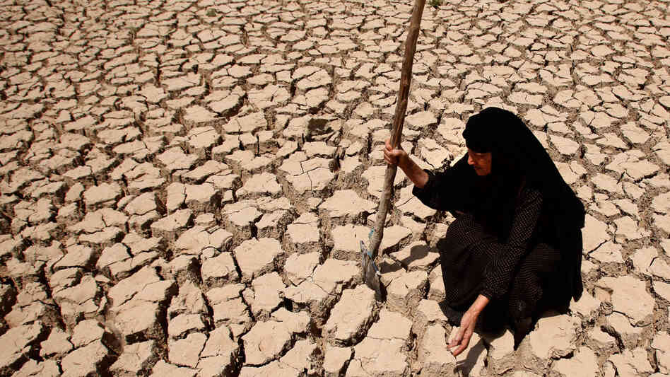 W: Adilla Finchaan checks her drought-stricken land south of Baghdad.