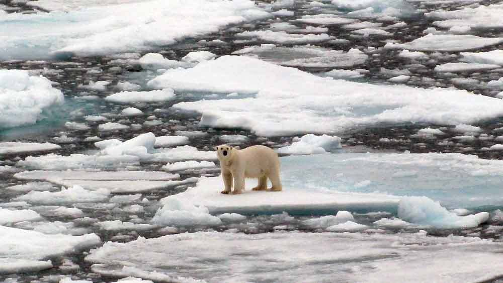 Path Across Frozen Arctic Tundra Was >> What Happens To Polar Bears As Arctic Ice Shrinks Npr