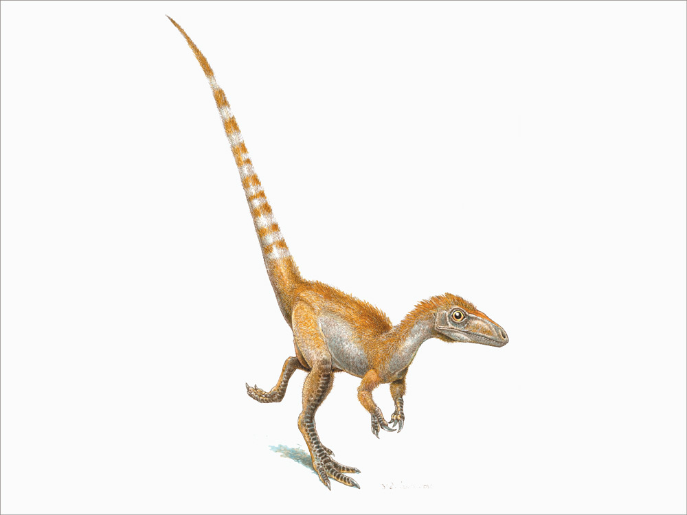 An artist's rendition of a single Sinosauropteryx. Jim RobbinsThe Sinosauropteryx was a turkey-sized, flesh-eating dinosaur that scientists believe had primitive feathers and dark rings around its tail. Jim Robbins