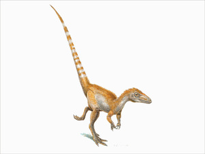 An artist's rendition of a single Sinosauropteryx
