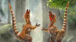 Artist rendition of two Sinosauropteryx