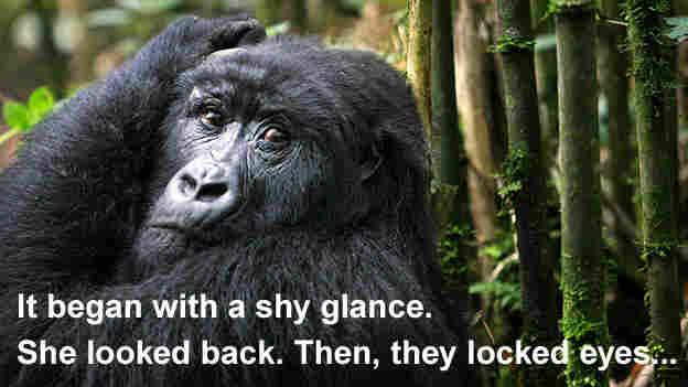 v3: A gorilla in a bamboo grove
