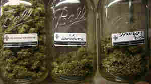 Different types of marijuana on display at a medical marijuana dispensary in Los Angeles.
