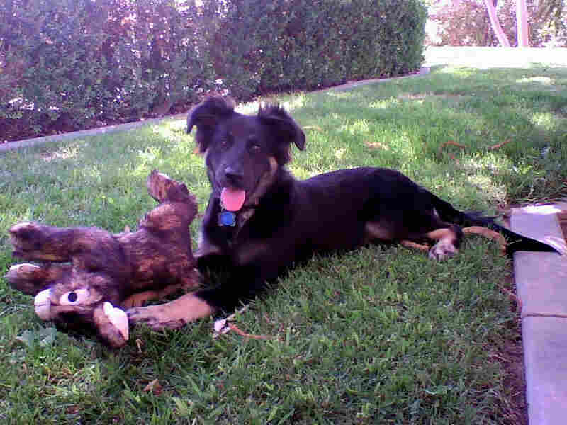 Karley Toole, a German shepherd mix who was savagely beaten and later euthanized.