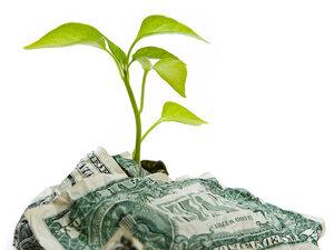 plant and money