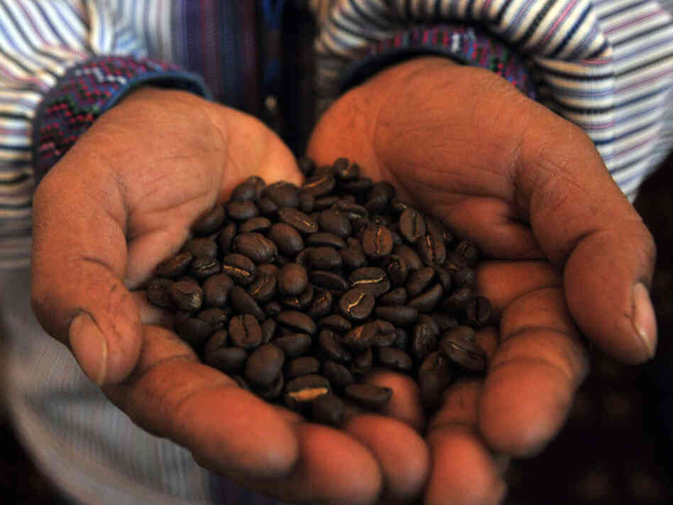 A man holds a handful of coffee beans at the World Coffee Conference in Guatemala City