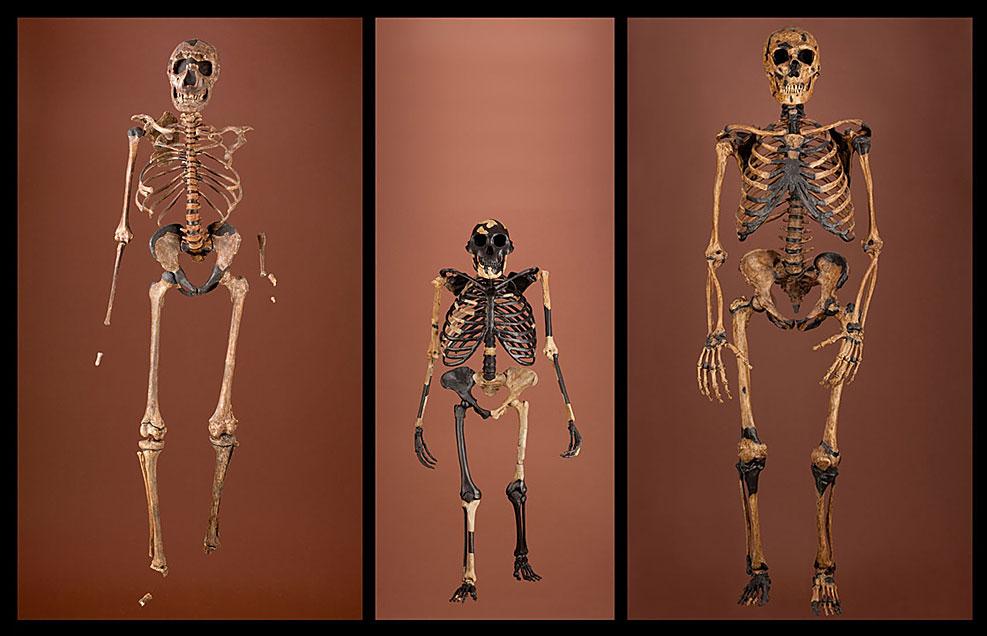 Three skeletons that span 2 million years
