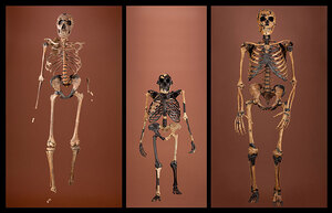 Three skeletons that span 2 million years