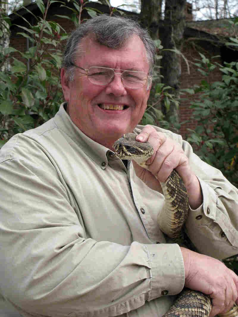 Ken Darnell milks thousands of rattlesnakes every year.
