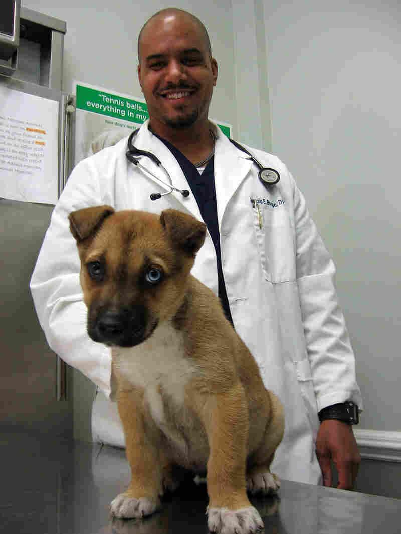 Veterinarian Jerrold Boone examines Cookie.