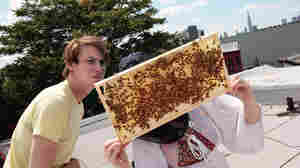 An urban beekeeping couple look over their colony of Italian honeybees on the roof in Brooklyn.