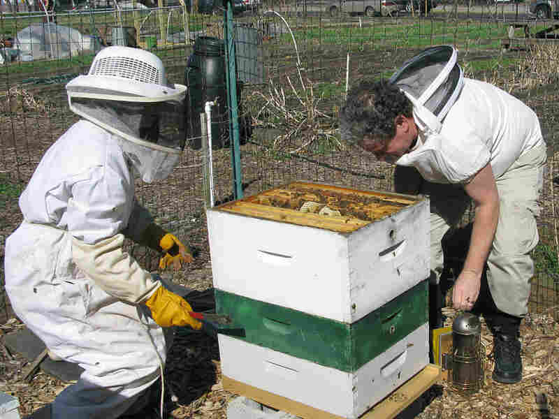 Deborah Grieg and Jim Fischer tend to a hive at East New York Farms.