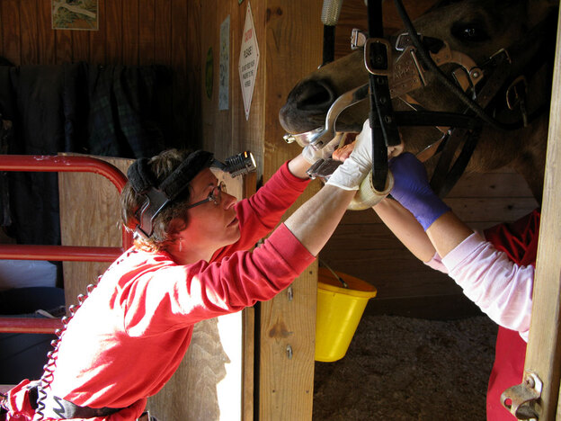 Veterinarian Diane Febles (left) and her assistant, Tracey McKnight, of Veterinary Equine Dentistry work on a horse in Henry County, Ga. The silver speculum keeps the horse's mouth open and prevents the animal from biting Febles' fingers.