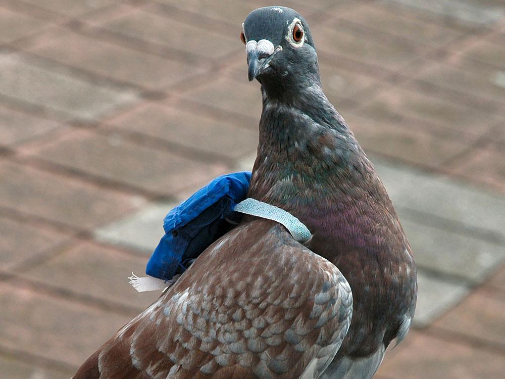 Bird Data Logger : Backpacked birds reveal who s the boss npr