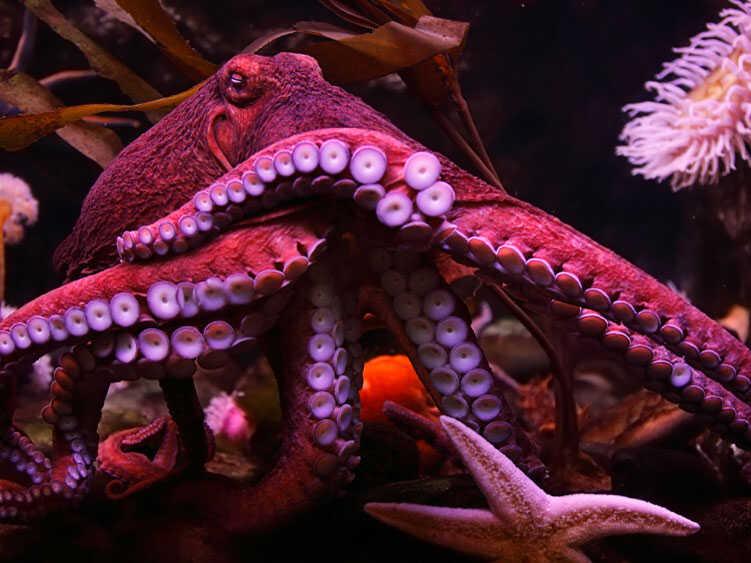 An octopus. iStockphoto.com