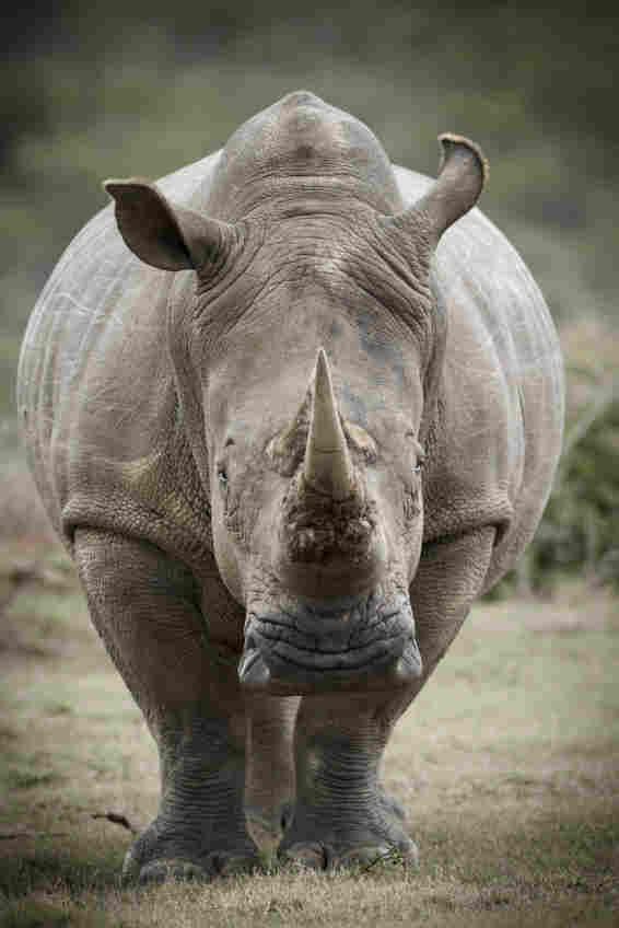 A rhino. iStockphoto.com
